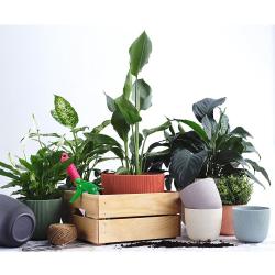 1x mintgrün Engelland moderner Blumentopf mit Drainagesystem Pflanztopf-Kübel widerstandsfähig rund wetterfest Kunststoff Ø 18 cm
