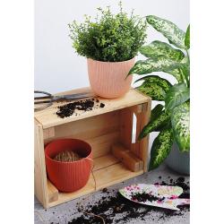 6x apricot Engelland moderner Blumentopf mit Drainagesystem Pflanztopf-Kübel widerstandsfähig rund wetterfest Kunststoff Ø 18 cm