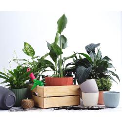 6x anthrazit Engelland moderner Blumentopf mit Drainagesystem Pflanztopf-Kübel widerstandsfähig rund wetterfest Kunststoff Ø 12 cm